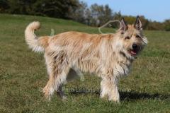 Shepherd - Picardy
